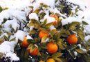 Europa sub zapada, a nins pana si in Grecia