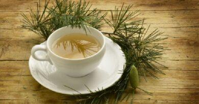 Ceaiul de ace de pin, bun pentru sanatate
