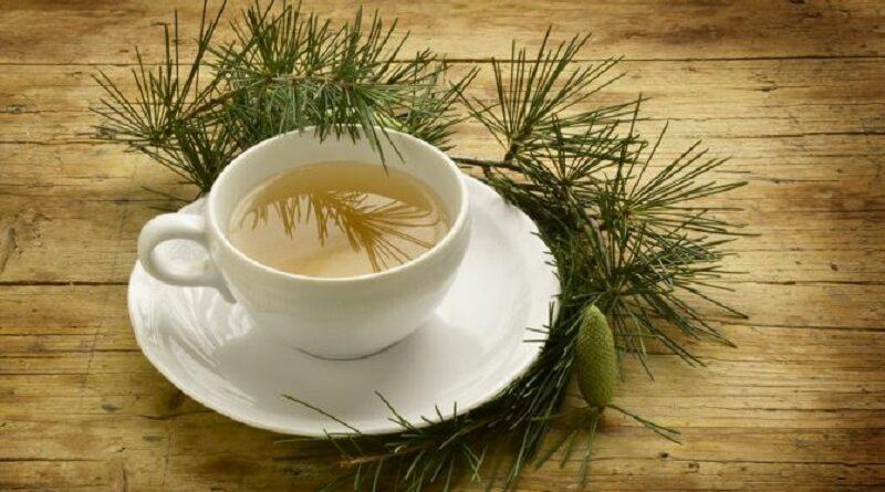 ceaiul de ace de pin